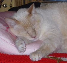 Rascalbear sleeping on his pink pillow.